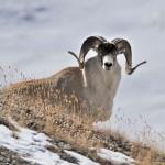Животные Таджикистана — Мир животных (Фауна)