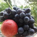 Плоды и семена растений