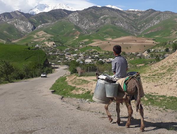 Мальчик на осле возить воду в горном кишлаке (2019г)