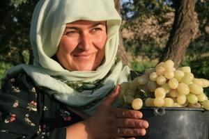 Женщины собирают урожай фрукты
