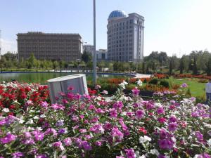 Flowers Dushanbe