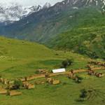 Hoit village