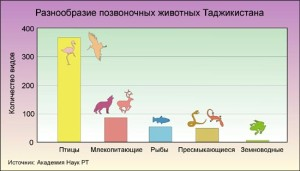 jivot_tajiki