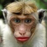 Маймуни лабсурхи прическа