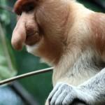 Бинни маймун