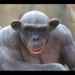 маймуни тарошидагии бемуй