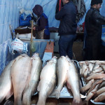 Fish in Tajikistan: types and prices
