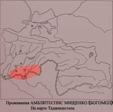 Amblythespis_mistshenkoi_Li