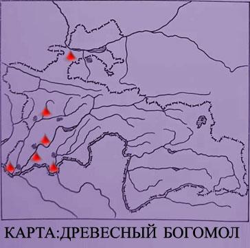 karta-drevesniy-bogoml