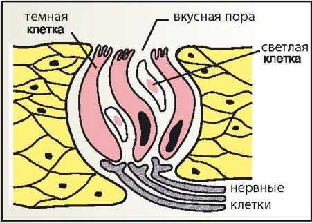 zoologiya_