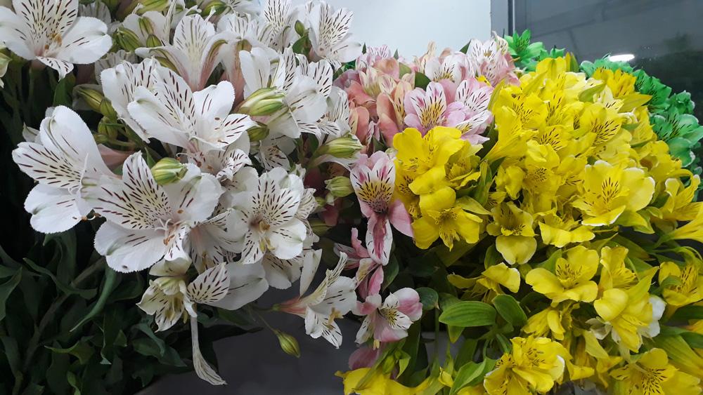 Свежие летние цветы
