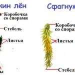ПОДЦАРСТВО ВЫСШИХ РАСТЕНИЙ (МОХОВИДНЫЕ)