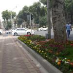 Розы Душанбе
