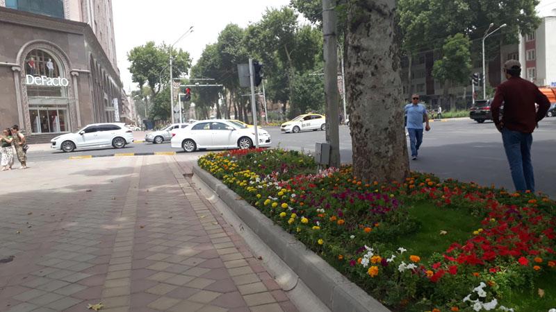 Розы Душанбе цветы