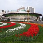 Тюльпаны Душанбе