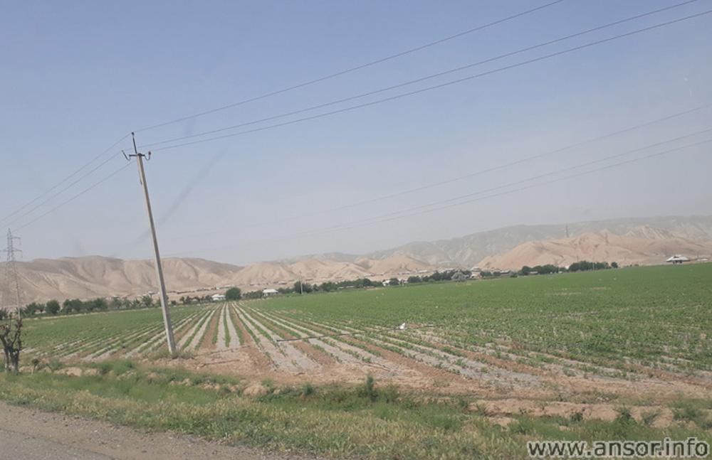 Хлопковые поля Шартузского района