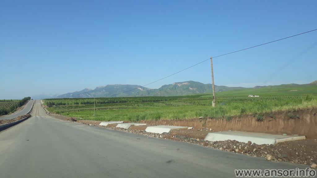 Фото виноградников Фахрабадского района. Снято 15.05.2020г.