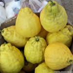 Самый крупный Лимон в мире — как называется?