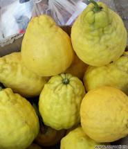 Лимоны Пандерода